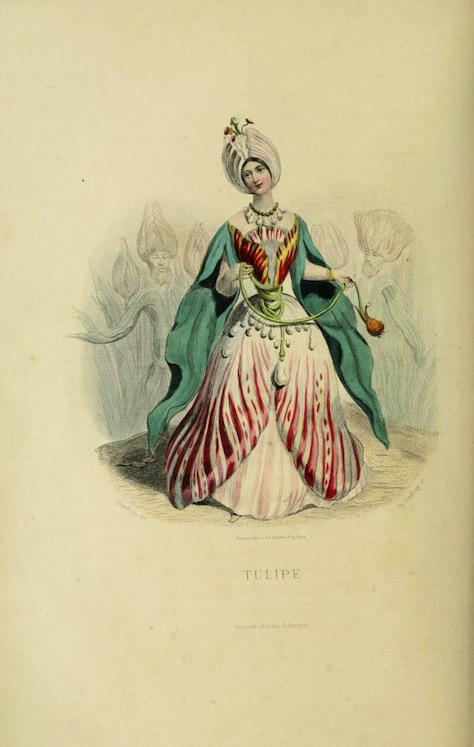 A sketch of an attractive young woman in a dress and with a sultanesque turban on her head. On closer inspection, her dress is upside down white-with-red tulip blossoms; each white sleeve sticks out of a green petal that flows downward parallel to the tulip; and the white wrap on her head is topped with blooming buds. She is, as the title under the figure declares, a tulip.
